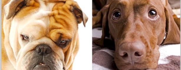 Concurso ¿Que refleja el rostro de tu mascota?