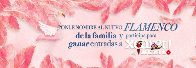 Ponle nombre al nuevo flamenco de Xcaret y gana un Tour Xcaret doble