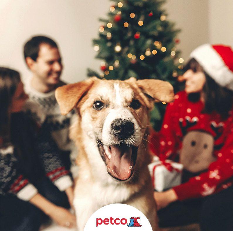 Concurso de Navidad Villancicos Petco  Gana un premio sorpresa para tu  mascota 54c7ca680631e