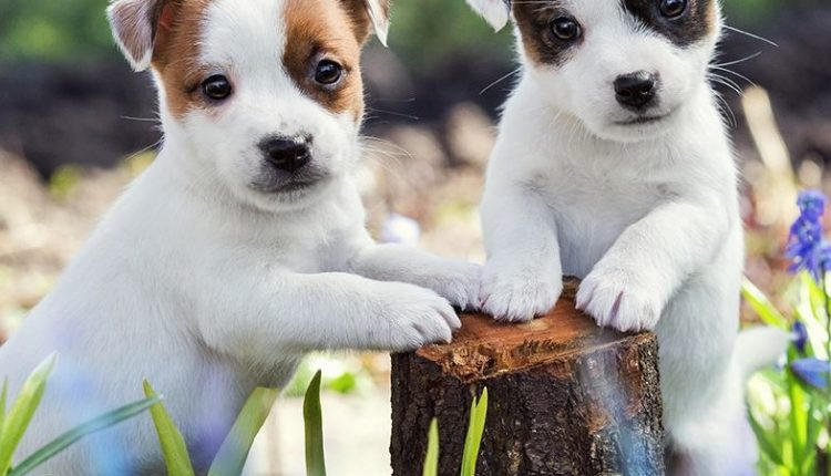 Concurso Petco Mes del Cachorro: Gana premio sorpresa para tu mascota