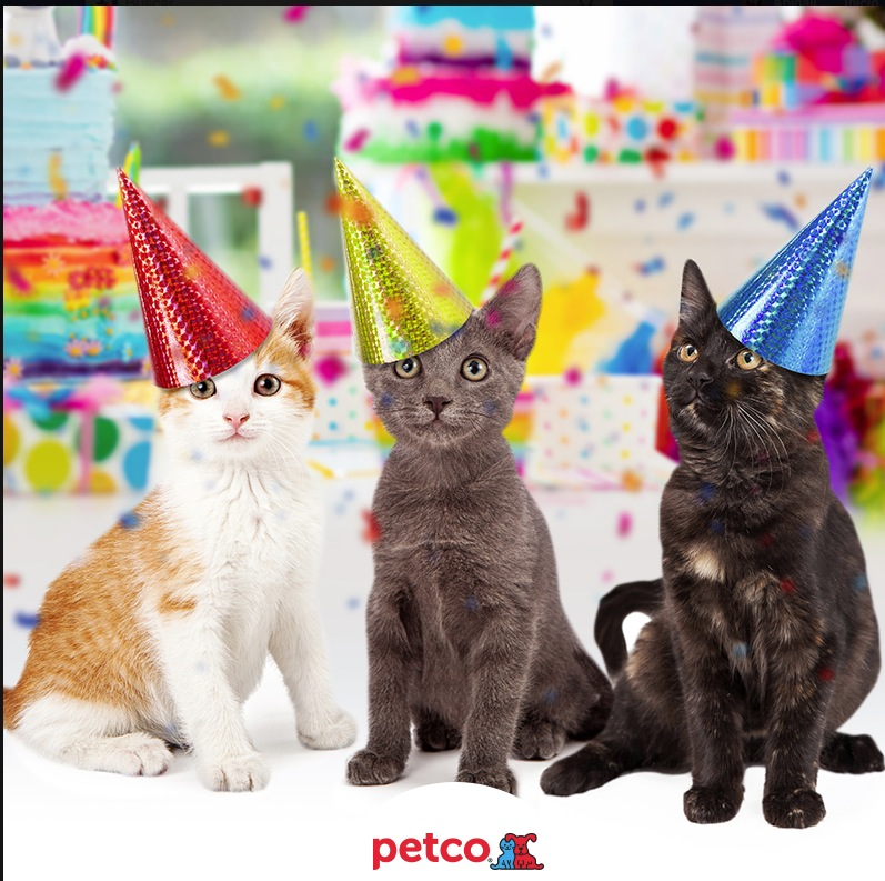 Concurso Petco Día del Gato 2019  Gana uno de los 3 premios sorpresa 2f75498747932
