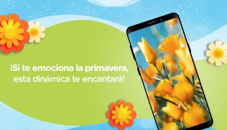 Concurso de Primavera Provident: Gana un iPhone 7, bocinas inalámbricas y más