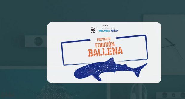 Concurso la Naturaleza nos Llama 2020: Gana smartphones para todo tu equipo en lanaturalezanosllama.com