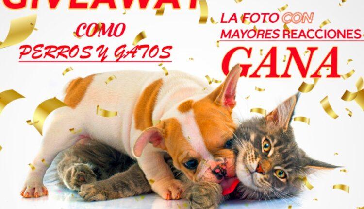 Concurso como Perros y Gatos: Gana una laptop Lenovo Ideapad cortesía de PC One