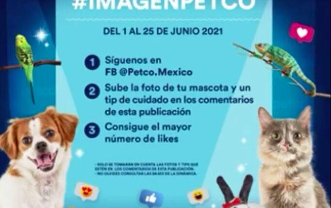 Concurso Imagen Petco: Gana kits para mascota, servicios de grooming y foto de tu mascota en tiendas Petco