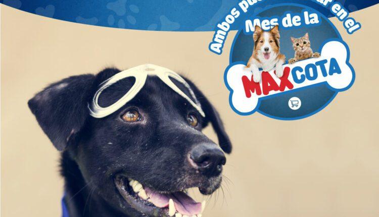 Concurso Calimax Mes de la Maxcota: Gana una casita para perro y una dotación de productos