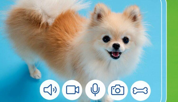 Gana un dispensador inteligente con cámara para mascotas